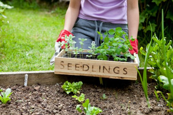 Save The Earth And Better Yourself 8 Reasons Why Growing Your Own Food Is Best Decision You Will Ever Make